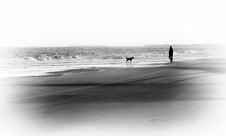 Beach Companions