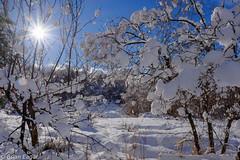 snowy scene (Brian Eagar Nature Photography) Tags: winter sun snow tree ice nature outside december fuji outdoor beam fujinon 2015 xt1 xf16 fujixt1 fujixf16