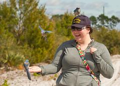 IMG_4051 (Bill Jelen) Tags: hat birding scrubjay rockledge birdonhat