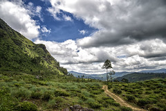 Sky vs earth (PrincipeShin) Tags: sky sri lanka lanscape eliya nuwara