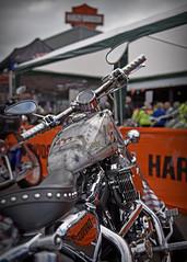 Full Metal Jacket.. (Harleynik Rides Again.) Tags: bike paint hd sportster fullmetaljacket custombike harleynikridesagain