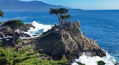 17 Mile Drive - The Lone Cypress (ArmyJacket) Tags: ocean california nature golf coast pacific outdoor landmark pebblebeach 17miledrive lonecyrpess