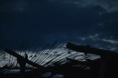 (Benoms) Tags: sunset beach clouds atardecer fly playa aves nublado michoacn maruata nak vuelo volar garzas ladespedida eladios benom benoms