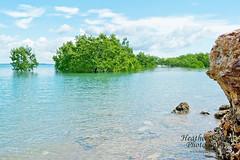 East Point (stormgirl1960) Tags: ocean tree beach water clouds darwin eastpoint northernterritory