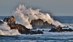 March15image3820 (Michael T. Morales) Tags: waves pacificgrove ptpinos