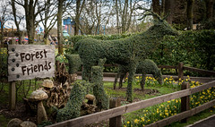 Paultons Theme Park: Gardens (David Claringbold) Tags: wood family trees grass animals gardens fence out wooden nikon day d750 24 dafodills tamron 70 lightroom hedges fense wodden peppapigworld paultonsthemepark