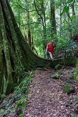 Warrie Circuit - Big step (NettyA) Tags: forest rainforest track australia trail bushwalking qld queensland bushwalk springbrook goldcoasthinterland 2016 springbrooknationalpark scenicrim seqld warriecircuit bushwalker scbwc sonya7r