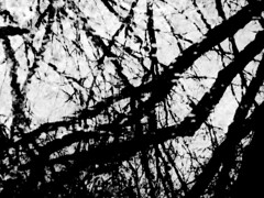 Surrealism 2016 (Rossdxvx) Tags: trees blackandwhite abstract reflection tree art texture nature silhouette contrast noir shadows outdoor michigan surrealism lofi surreal gritty textures overexposed grime minimalism textured 2016
