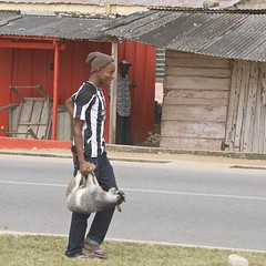 the goat handbag (Pejasar) Tags: africa male walking kid candid goat ghana westafrica hoho handbag youngman stockingcap carried streetphotograph