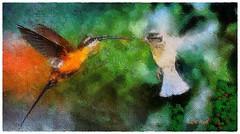 About a little kiss ? (Leo Bar) Tags: art texture birds painting artwork aerial sensual fantasy sparrow compositing colorgrading littlehermit leobar pixinmotion netartii