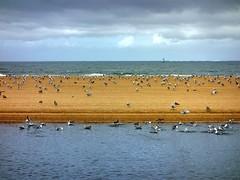 Praia Amrica 02 un da de lluvia (Pepe Fernndez) Tags: autumn mar paisaje nubes otoo olas gaviotas panxn nigrn playaamrica praiaamrica