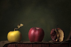 Life or Still life? (Diana Postolachi) Tags: life old stilllife apple canon studio photography lights still symbol grain young mature apples chisinau moldova symbolism photoschool rybaleov