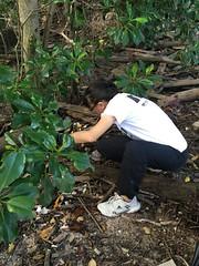 30-Env&CivSoc-World-Water-Day-LCK-Cleanup-26Mar16 (Habitatnews) Tags: mangrove capt nus worldwaterday limchukang iccs