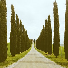 Val D'Orcia - Toscana #vscocam #tuscany... (polaroid android) Tags: italy green beautiful jj italia tuscany cypress toscana valdorcia vscocam uploaded:by=flickstagram instagram:photo=711471208661781105264363329 instagram:venuename=vald27orcia instagram:venue=7823991