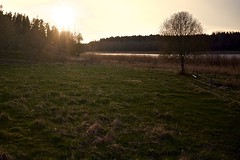 Lommaren (nypan_sthlm) Tags: sunset landscape sweden tre norrtlje greengras