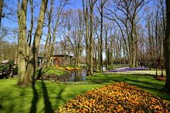 Keukenhof Gardens (hhschueller) Tags: netherlands nederland keukenhof lisse southholland eosm3