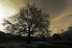 The tree (M a u r i c e) Tags: sky tree nature netherlands field landscape cloudy heather wideangle loosdrecht efs1022mm ultrawidezoom