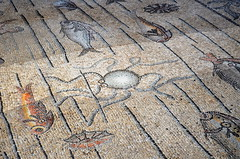 Octopus [Aquileia - 11 August 2015] (Doc. Ing.) Tags: summer italy ruins roman mosaic unesco tiles octopus fvg ud friuli aquileia romanruins 2015 friuliveneziagiulia nordest