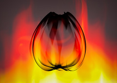 Tulip, Burning Flower Of Spring (Alfred Grupstra Photography) Tags: abstract colors fire tulip