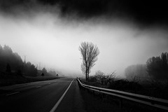 Bright Side Of The Road (una cierta mirada) Tags: road trees sky blackandwhite mist tree blanco nature weather fog landscape highway rboles y negro foggy cielo rbol niebla bnw