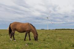 Grazing with machines (Luis Granada) Tags: parque sky horse animal uruguay energy power wind farm turbine windturbine windfarm renewable windpower windenergy energia turbina vestas parqueeolico eolico aerogenerador renovables energiasrenovables renewableenergies canon6d