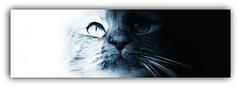 Xena the cat (Denni1980) Tags: blackandwhite white black cat nose eyes whiskers xena