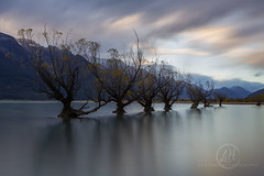 Swimming Trees - Glenorchy, NZ (Lisa Hawkins Photography) Tags: new trees sunset lake mountains clouds canon landscape island photography holidays south dramatic zealand wakatipu 6d glenorchy 16mm35mm