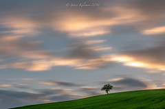 My tree , on the Marches hills (kisorin) Tags: hd marche f3556 pentaxda 1685mm