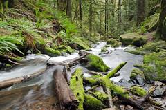 Log Jam (Tom Fenske Photography) Tags: trees motion blur green nature water forest stream day wilderness