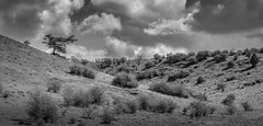 One Tree Hill (dave.tay1or) Tags: blackandwhite bw panorama tree fall monochrome weather clouds landscape countryside spring flickr hill olympus hampshire photomerge 75300mm winchester stcatherines omd lightroom 2016 m43 mft lr6 em5 microfourthirds mzuiko em5markii em5mark2 em5mk2