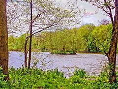 Steenstra  park _1030605_xxx tonemapped (Nico Z1) Tags: lake tree meer boom hdr heemskerk steenstrapark