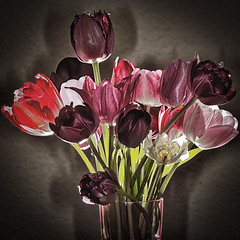 Tulpenstrau mit Schatten (efgepe) Tags: color colour macro tulips nik makro blitz farbe metz tulpen lightroom colorefexpro sigma70mm sigma70mm28dgmacro zangenblitz