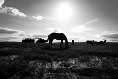 DSC01154 (jlstein339) Tags: sunset blackandwhite horse monochrome animal landscape outdoors aircraft aviation military sony cybershot soldiers silouettes jrtc rx100iv