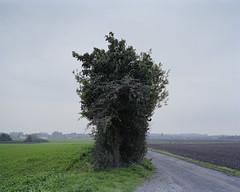 (Daniel.Bruns) Tags: nature bush fuji dusk 4x5 chamonix 160ns