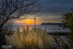 Sunrise through the Pampus Grass. Scalby Mills Scarborough. (Distinctive Digital) Tags: morning sea england tree water lamp sunrise bay coast exterior lampost gb scarborough vignette shrubs hdr northyorkshire headland colorimage autumntime landscapeorientation tonemapped dawnofday photoshopprocessed seascapephotography