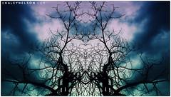 kaleynelsonsym15_1 (kaleynelson) Tags: trees abstract tree nature landscape meditate symmetry mirrored symmetric symmetrical meditation psychedelic spiritual chakra chakras alexgrey sacredgeometry kaleynelson