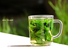 Mint taste (StRo92) Tags: green drink mint