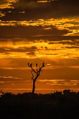untitled (171 of 392).jpg (Oddshots) Tags: nature animals southafrica krugerpark