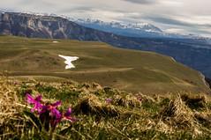 vercors 04 2016 (fredbonnet26) Tags: montagne vercors ambel