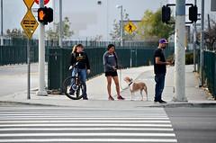 Orange Line Crossing (Pedestrian Photographer) Tags: california orange dog cali la los san angeles jan walk january pedestrian line socal valley fernando bicyclist sfv crosswalk jogger bikeway ribbet thevalley 2016 dsc4453 dsc4453b