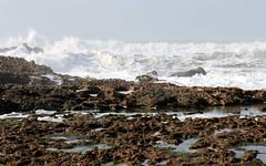 moroccan coast big waves (5) (kexi) Tags: ocean africa white water canon coast march big rocks waves atlantic morocco foam maroc huge atlanticocean 2015 maroko instantfave oualidia