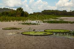 NO_Manaus0414 (Visit Brasil) Tags: travel brazil tourism horizontal brasil amazon rainforest vitriargia manaus norte amazonas detalhe ecoturismo externa semgente diurna riosolimes visitbrasil