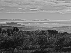 Manosque and its olive trees by a foggy morning (Hlne_D) Tags: blackandwhite bw cloud mountain france alps tree fog montagne alpes noiretblanc nb paca provence nuage arbre brouillard hdr olivier olivetree montdor alpesdehauteprovence ahp manosque provencealpesctedazur hdrpicture photohdr tourdumontdor hlned