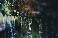 DSC04410 (Benjamin Ling Photography) Tags: plants nature water rock gardens digital forest 35mm lens photography moss bokeh sony botanic canberra algae portra fee whacking preset t15 samyang a7s