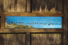 Observation Blind (eccentricVelo) Tags: observation pentax hunting ducks maryland goose waterfowl marylandparks pentaxk30 pentaxnation
