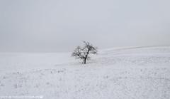 A lonely Tree on a bleak Winter Morning. (andreasheinrich) Tags: winter cold tree fog germany landscape deutschland nebel snowy verschneit january felder fields bleak kalt landschaft bäume badenwürttemberg trüb neckarsulm nikond7000