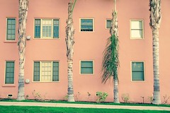 The Four Palm Tree (tatsuya.ouchi) Tags: california road street city pink light red urban stilllife plants plant abstract color tree green art texture window lines wall architecture vintage square grid town losangeles leaf colorful pattern apartment outdoor fine stripe salmon streetphotography pop palm pale line neighborhood silverlake roadside minimalism rectangle repeat
