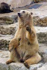 _DSC9432 (alfaluis) Tags: animal zoo pato jardim macaco tigre urso zoologico