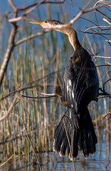 20160213-_74P6807.jpg (Lake Worth) Tags: bird nature birds animal animals canon wings florida wildlife feathers wetlands everglades waterbirds southflorida birdwatcher canonef500mmf4lisiiusm
