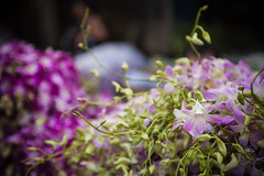 Thailand - Flowers (Cyrielle Beaubois) Tags: travel flowers thailand asia purple orchids bokeh thalande exotic tropical asie southeast flowersmarket 2015 canoneos5dmarkii cyriellebeaubois